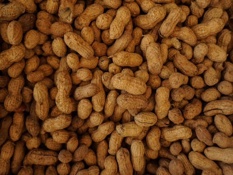 Food Allergy Info Session/Q & A